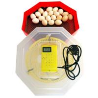 Incubator Oua CLEO 5D cu termometru 60 Oua de gaina sau 150 prepelita